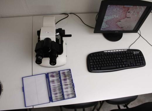 Microscopia (6)