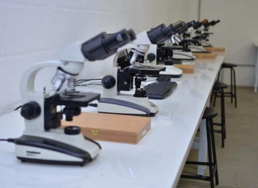 Microscopia (7)