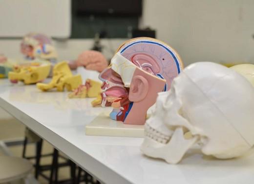 Neuroanatomia (13)