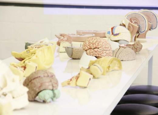 Neuroanatomia (2)