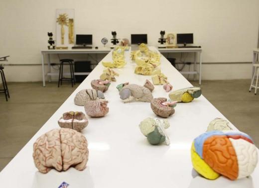 Neuroanatomia (5)