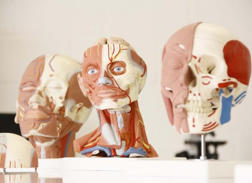 Osteomuscular (5)